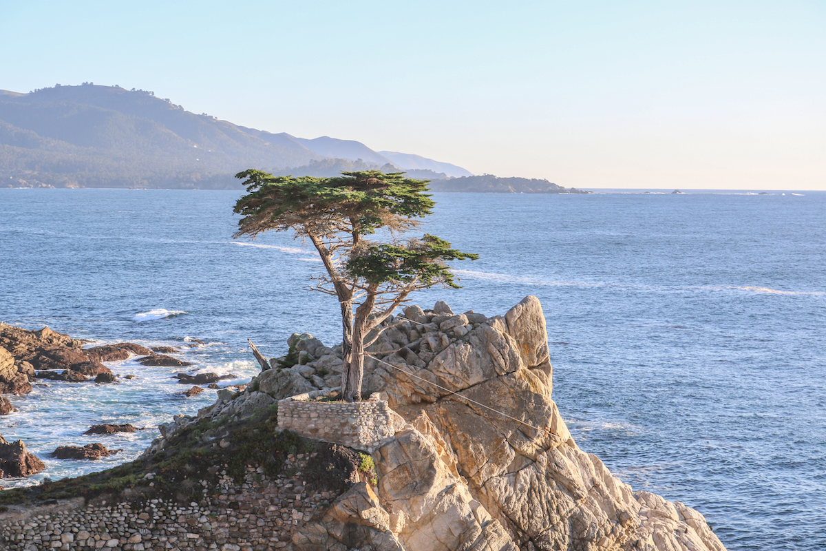 The Lone Cypress At Pebble Beach Courtesy Of Company
